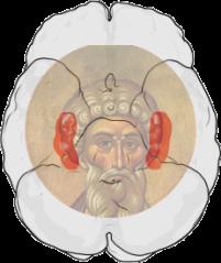 Lage der Hippocampi (rot) im menschlichen Gehirn: Ansicht von unten (die Stirn liegt im Bild oben)