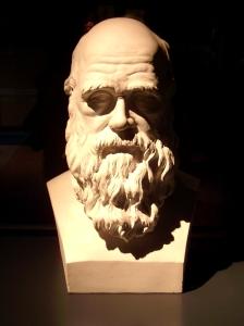 Darwin-Büste im Naturkunde-Museum Berlin. Bild: BB