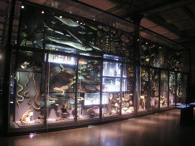 800px-naturkundemuseum_berlin_biodiversitaet.jpg