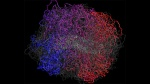 image: Mirny et al/MIT