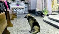 Hund_kirche
