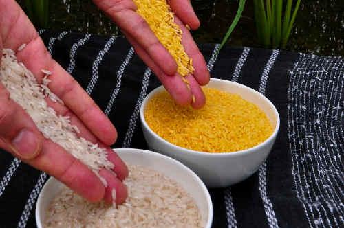 Bild: International Rice Research Institute (IRRI) CC BY 2.0