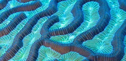Image: NOAA/Flickr