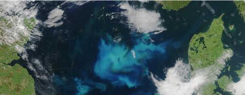 Algen in der Nordsee: Zwischen Dänemark und Großbritannien bilden sie einen riesigen Teppich. Bild. NASA