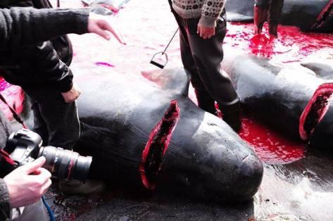 Bild: Sea Shepherd Deutschland/Facebook