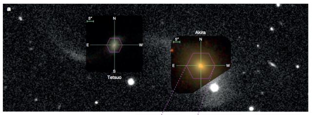 Image: Cheung et al