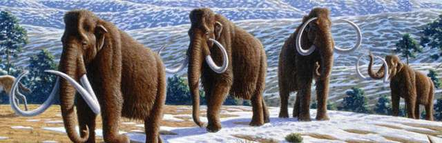 Woolly mammoths (Mammuthus primigenius) in a late Pleistocene landscape in northern Spain. (Information according to the caption of the same image in Alan Turner (2004) National Geographic Prehistoric Mammals, Washington, D.C.: National Geographic. Image: Wikimedia Commons