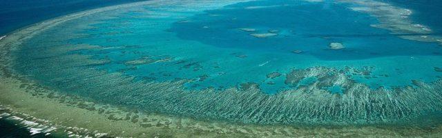 Great Barrier Reef, Steve Parish/flickr/CC BY 2.0