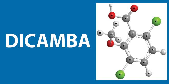 Dicamba oder 3,6-Dichlor-2-methoxybenzoesäure. Im Rahmen von Roundup Ready Xtend kommt es als weniger flüchtige Formulierung zum Einsatz